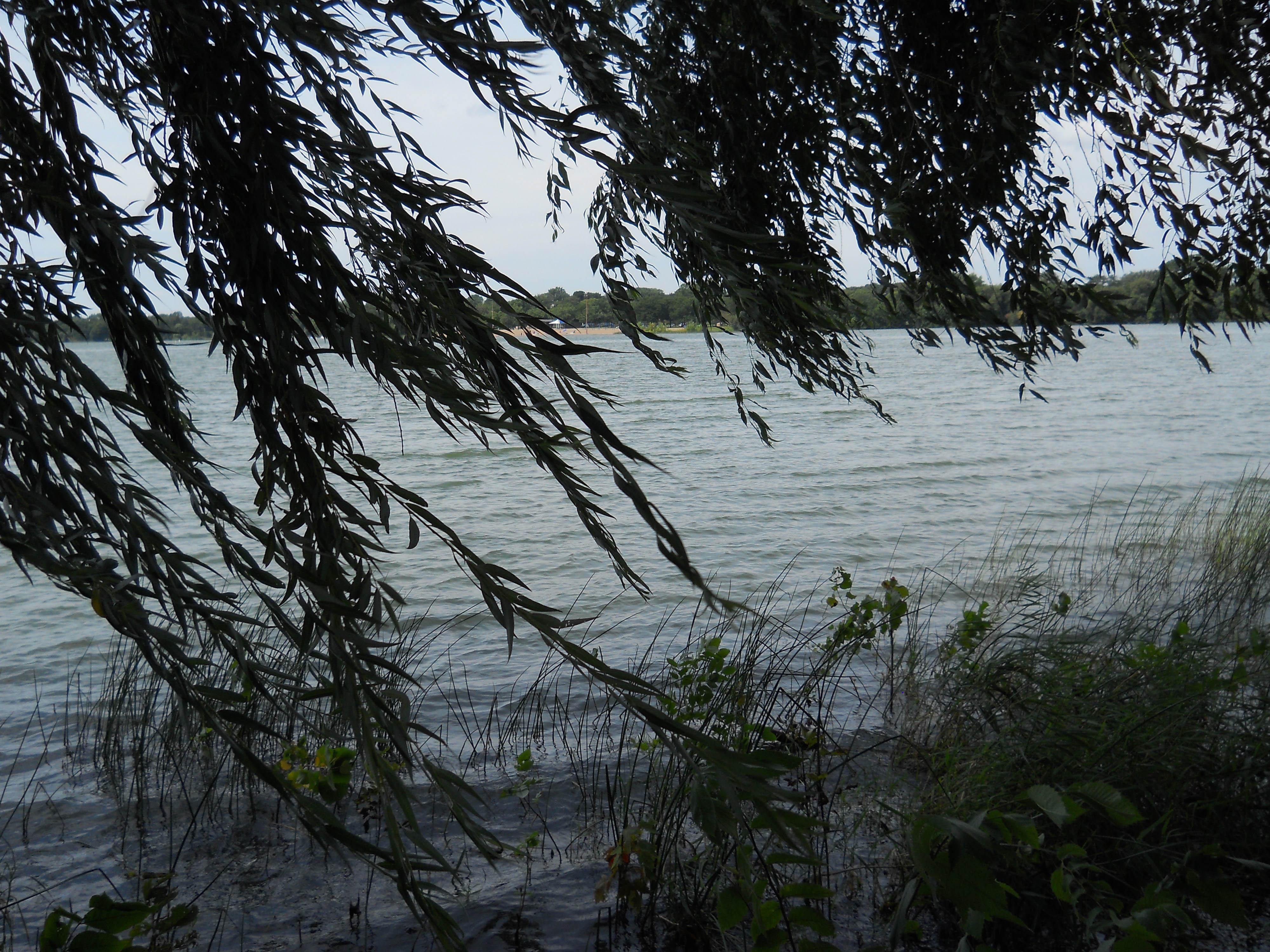 Nokomis willow sml