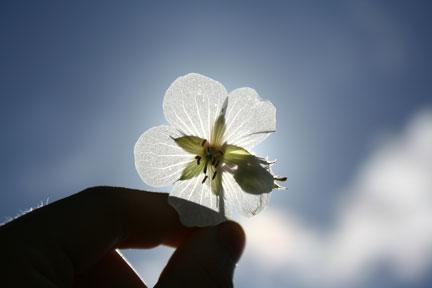handholdingflower